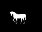 pferde und esel in not